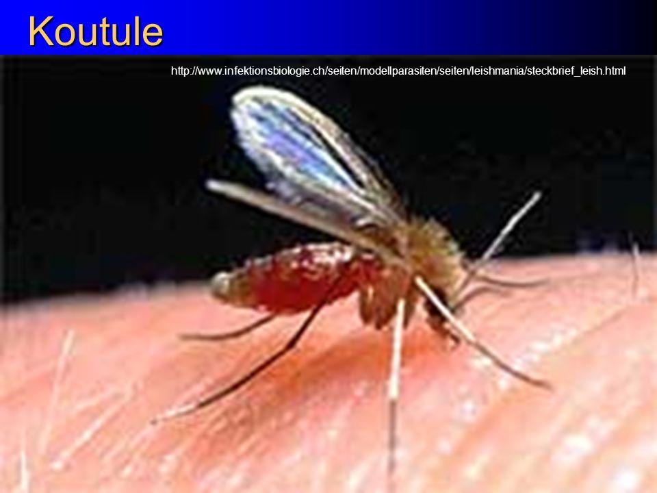 Koutule http://www.infektionsbiologie.ch/seiten/modellparasiten/seiten/leishmania/steckbrief_leish.html