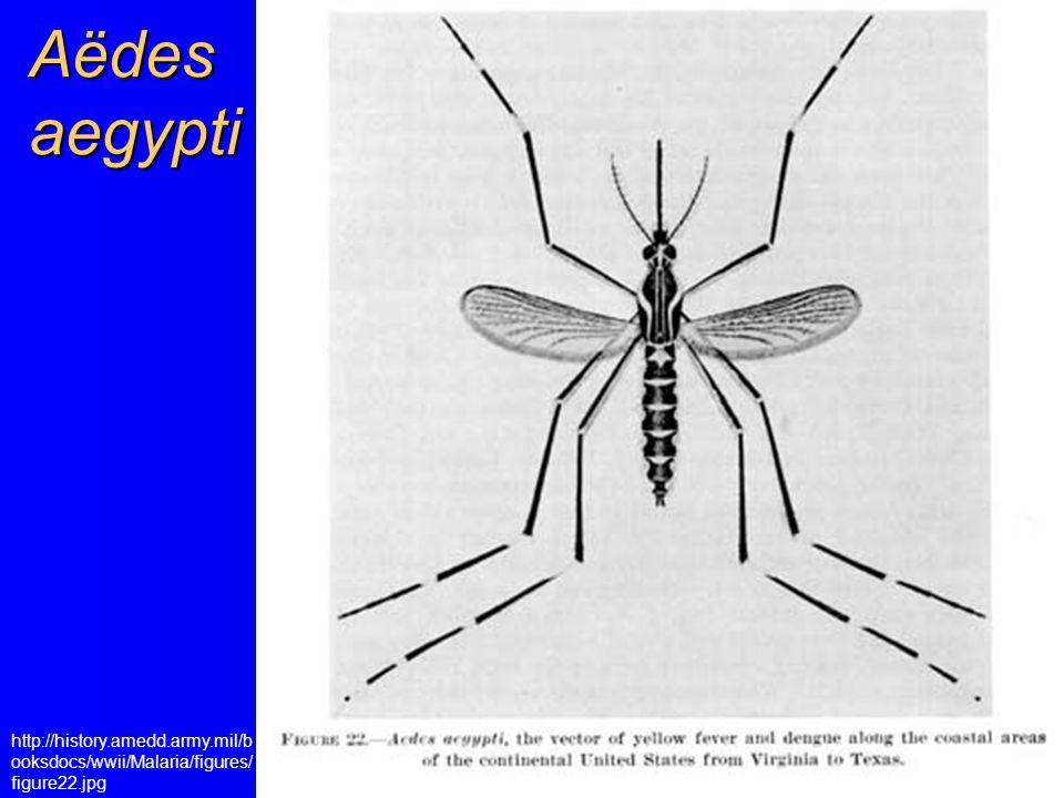 Aëdes aegypti http://history.amedd.army.mil/b ooksdocs/wwii/Malaria/figures/ figure22.jpg