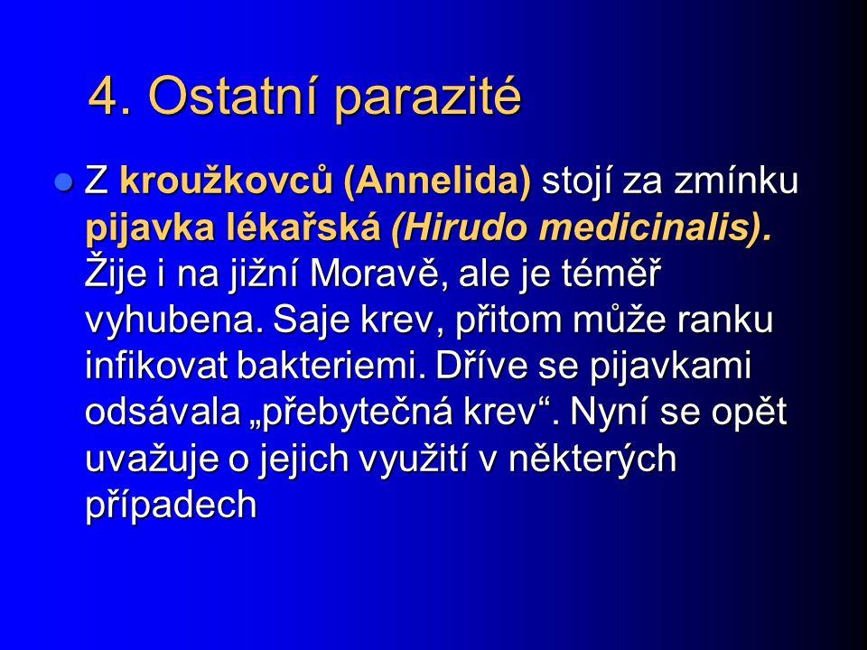 4. Ostatní parazité Z kroužkovců (Annelida) stojí za zmínku pijavka lékařská (Hirudo medicinalis). Žije i na jižní Moravě, ale je téměř vyhubena. Saje