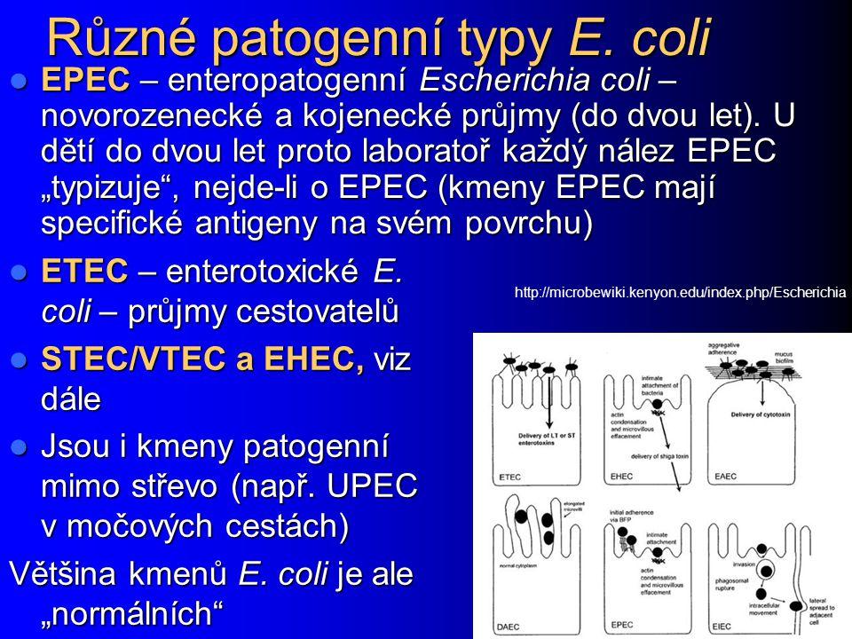 Různé patogenní typy E. coli EPEC – enteropatogenní Escherichia coli – novorozenecké a kojenecké průjmy (do dvou let). U dětí do dvou let proto labora