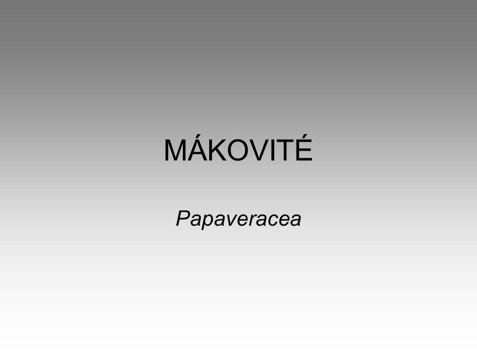 MÁKOVITÉ Papaveracea