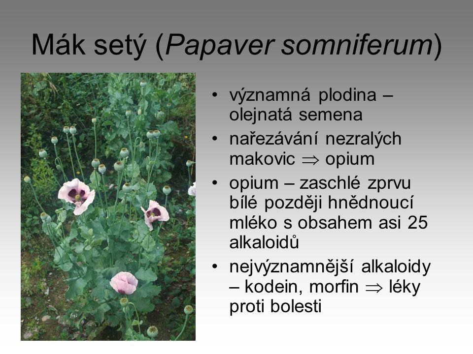 Mák setý (Papaver somniferum) významná plodina – olejnatá semena nařezávání nezralých makovic  opium opium – zaschlé zprvu bílé později hnědnoucí mlé