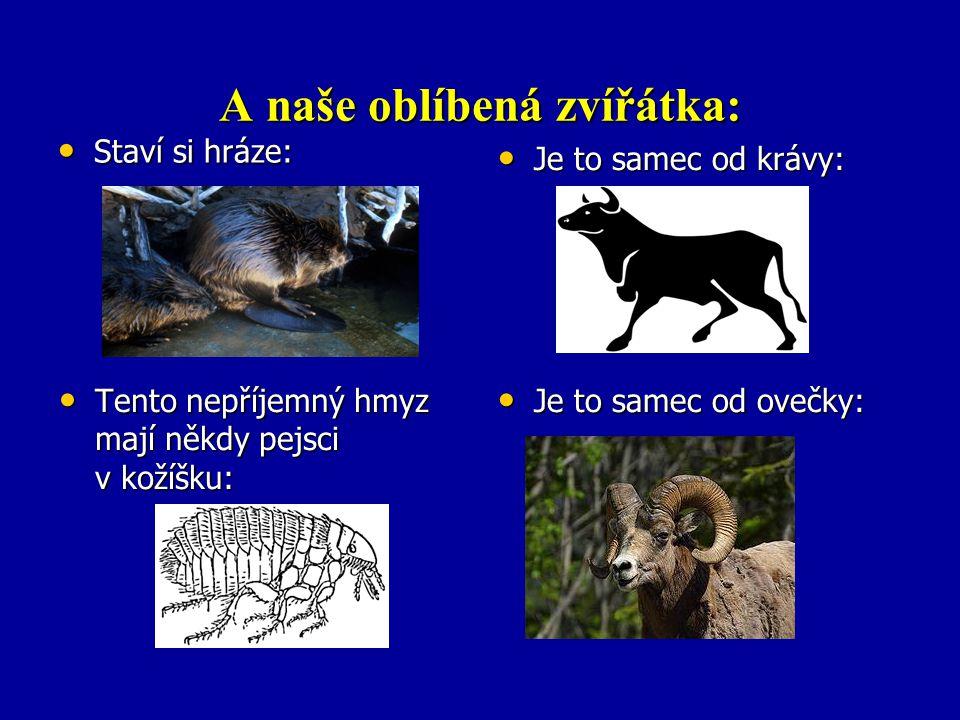 A naše oblíbená zvířátka: Staví si hráze: Staví si hráze: Je to samec od krávy: Je to samec od krávy: Tento nepříjemný hmyz mají někdy pejsci v kožíšk