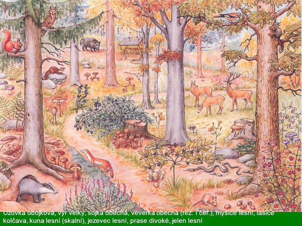 Užovka obojková, výr velký, sojka obecná, veverka obecná (rez. i čer.), myšice lesní, lasice kolčava, kuna lesní (skalní), jezevec lesní, prase divoké