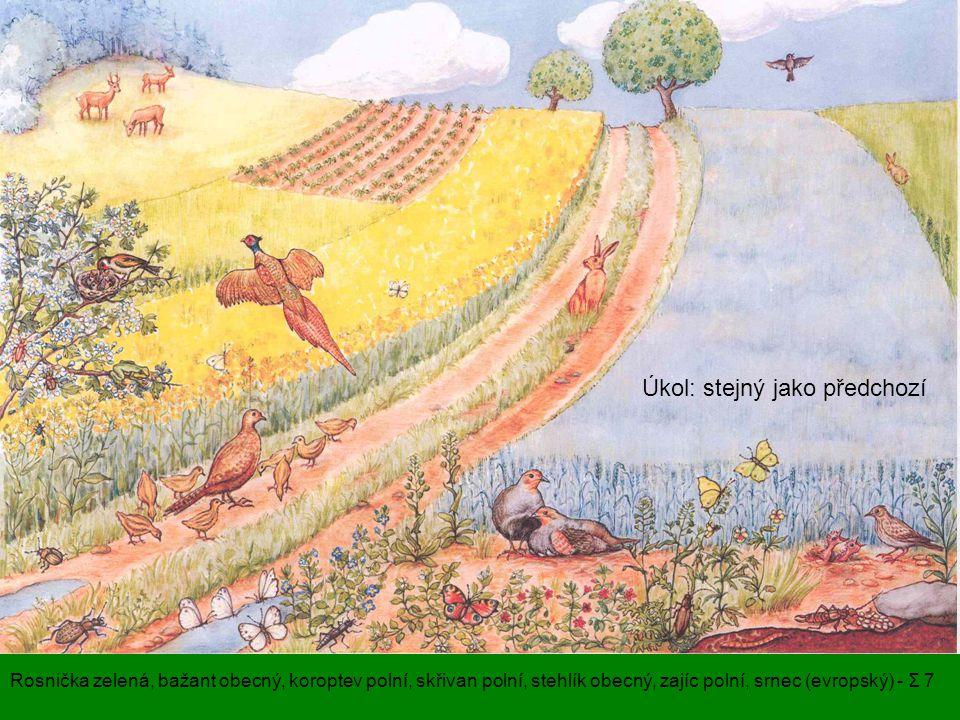 Úkol: stejný jako předchozí Rosnička zelená, bažant obecný, koroptev polní, skřivan polní, stehlík obecný, zajíc polní, srnec (evropský) - Σ 7