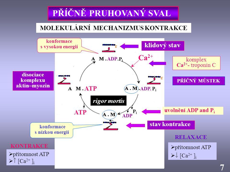 MOLEKULÁRNÍ MECHANIZMUS KONTRAKCE ADP P i ADP. P i 7 lehké řetězce myozinu vazebné místo pro ATP vazebná místa pro aktin komplex Ca 2+ - troponin C Ca
