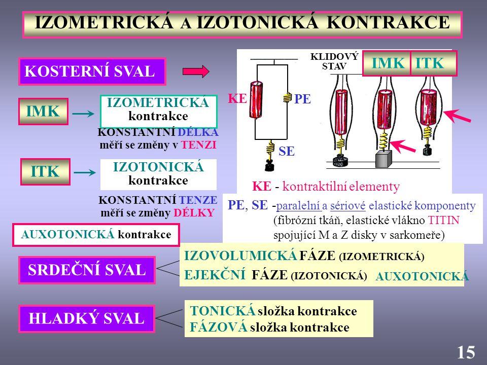 IZOMETRICKÁ A IZOTONICKÁ KONTRAKCE KOSTERNÍ SVAL KLIDOVÝ STAV PE, SE - paralelní a sériové elastické komponenty (fibrózní tkáň, elastické vlákno TITIN