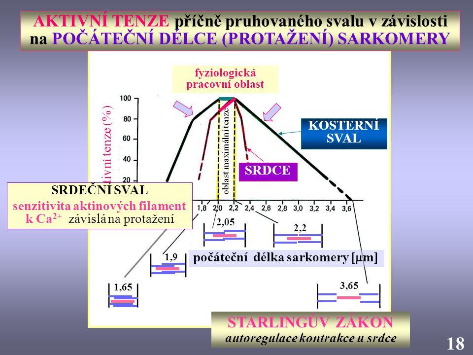 AKTIVNÍ TENZE příčně pruhovaného svalu v závislosti na POČÁTEČNÍ DÉLCE (PROTAŽENÍ) SARKOMERY počáteční délka sarkomery [  m] STARLINGŮV ZÁKON autoreg