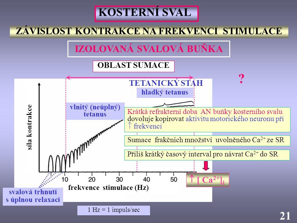 frekvence stimulace (Hz) síla kontrakce vlnitý (neúplný) tetanus ZÁVISLOST KONTRAKCE NA FREKVENCI STIMULACE 2121 OBLAST SUMACE hladký tetanus KOSTERNÍ