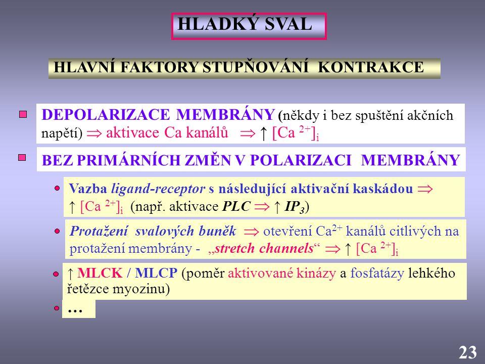 2323 HLAVNÍ FAKTORY STUPŇOVÁNÍ KONTRAKCE DEPOLARIZACE MEMBRÁNY (někdy i bez spuštění akčních napětí)  aktivace Ca kanálů  ↑ [Ca 2+ ] i BEZ PRIMÁRNÍC