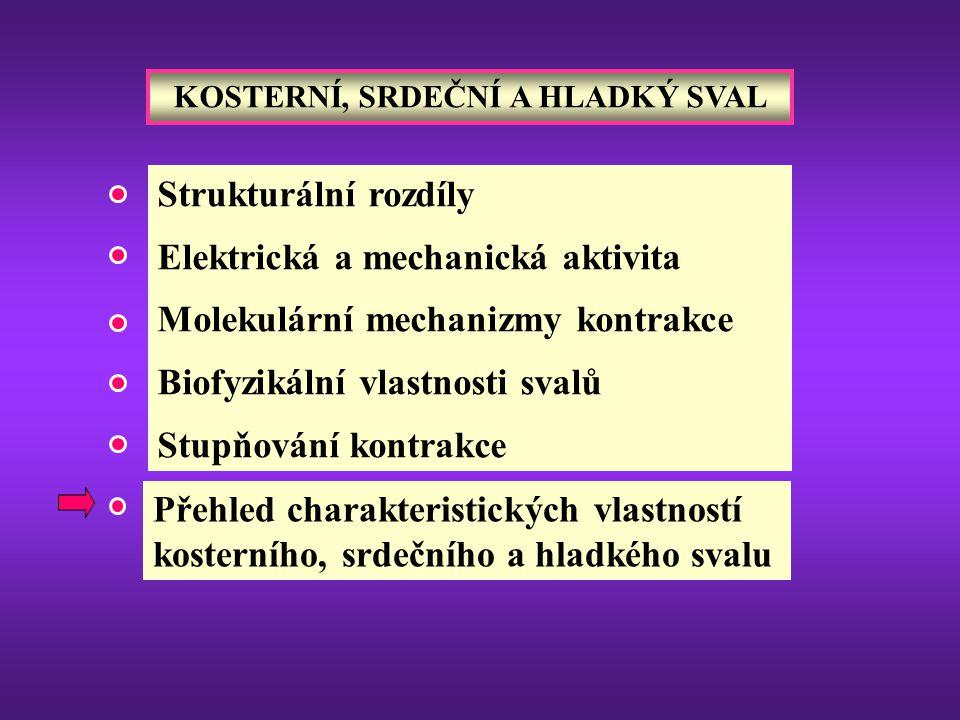 Strukturální rozdíly Elektrická a mechanická aktivita Molekulární mechanizmy kontrakce Biofyzikální vlastnosti svalů Stupňování kontrakce KOSTERNÍ, SR