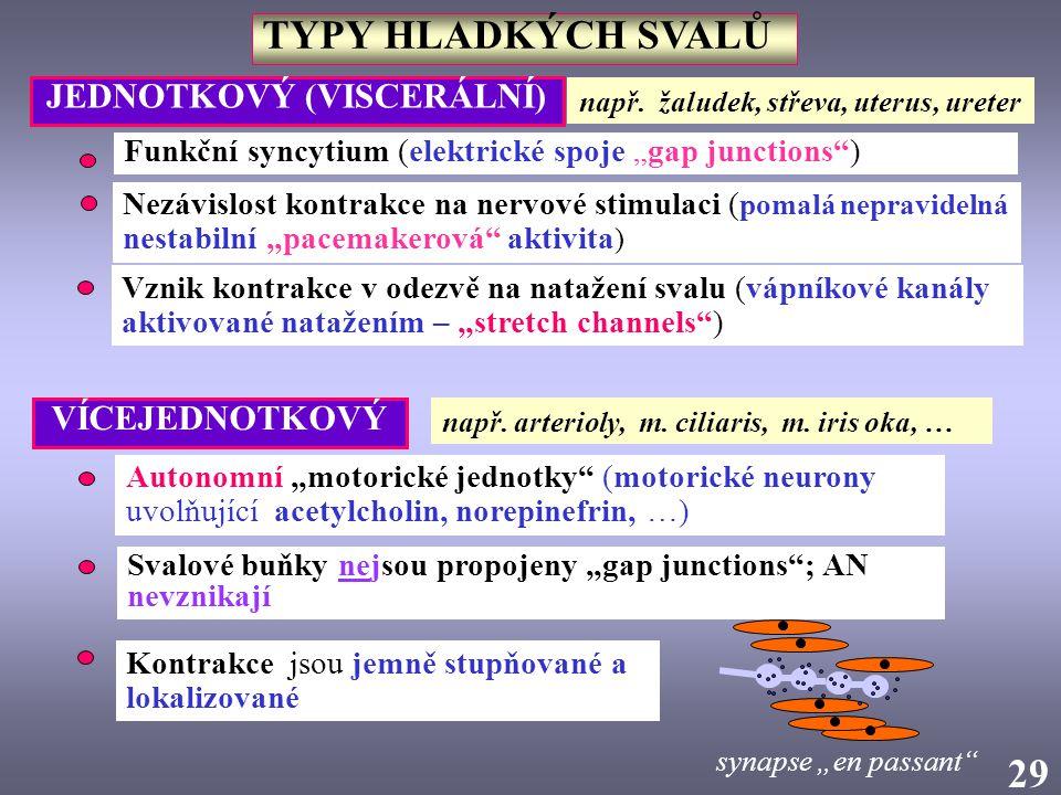 """2929 TYPY HLADKÝCH SVALŮ Funkční syncytium (elektrické spoje """"gap junctions"""") Nezávislost kontrakce na nervové stimulaci ( pomalá nepravidelná nestabi"""