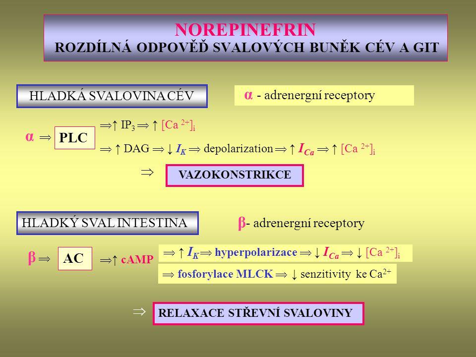 NOREPINEFRIN ROZDÍLNÁ ODPOVĚĎ SVALOVÝCH BUNĚK CÉV A GIT α - adrenergní receptory  ↑ IP 3  ↑ [Ca 2+ ] i  ↑ DAG  ↓ I K  depolarization  ↑ I Ca  ↑