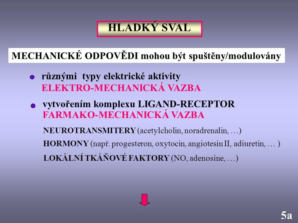 5a HLADKÝ SVAL MECHANICKÉ ODPOVĚDI mohou být spuštěny/modulovány různými typy elektrické aktivity ELEKTRO-MECHANICKÁ VAZBA vytvořením komplexu LIGAND-
