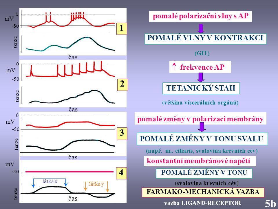 0 -50 mV tenze 0 -50 tension 5b5b mV čas látka x látka y -50 0 0 čas tenze 1 pomalé polarizační vlny s AP frekvence AP 2 pomalé změny v polarizaci mem
