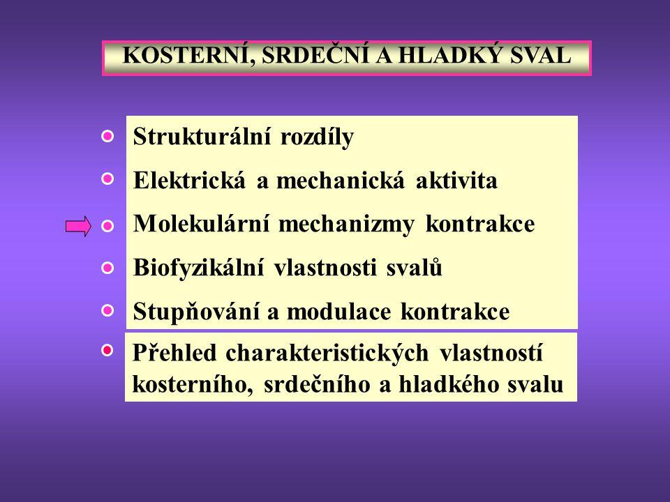 NEUROHUMORÁLNÍ MODULACE KONTRAKCE (TONU) HORMONY (estrogen, progesteron, oxytocin, epinefrin, angiotenzin, vasopresin, serotonin, …) HLADKÝ SVAL NEUROMEDIÁTORY autonomních nervů (acetylcholin, norepinefrin, neuropeptidy, …) Zcela rozdílný účinek u vaskulárního, intestinálního a bronchiálního hladkého svalu !.