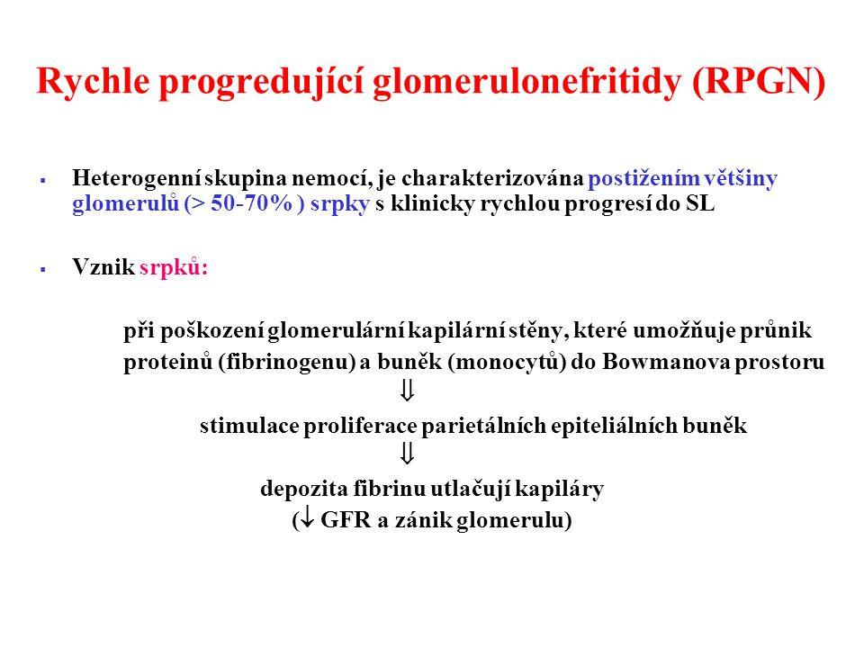 Rychle progredující glomerulonefritidy (RPGN)  Heterogenní skupina nemocí, je charakterizována postižením většiny glomerulů (> 50-70% ) srpky s klinicky rychlou progresí do SL  Vznik srpků: při poškození glomerulární kapilární stěny, které umožňuje průnik proteinů (fibrinogenu) a buněk (monocytů) do Bowmanova prostoru  stimulace proliferace parietálních epiteliálních buněk  depozita fibrinu utlačují kapiláry (  GFR a zánik glomerulu)