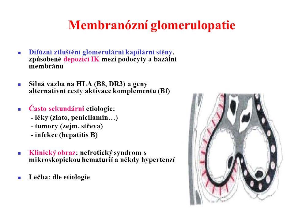 Membranózní glomerulopatie Difúzní ztluštění glomerulární kapilární stěny, způsobené depozicí IK mezi podocyty a bazální membránu Silná vazba na HLA (B8, DR3) a geny alternativní cesty aktivace komplementu (Bf) Často sekundární etiologie: - léky (zlato, penicilamin…) - tumory (zejm.