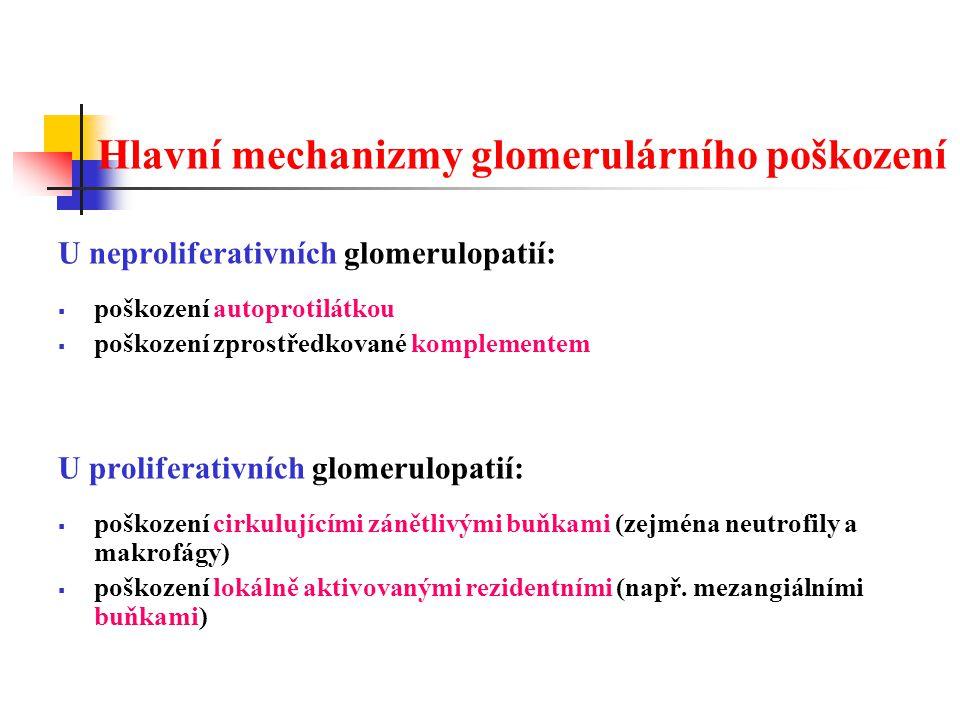 Fokální (segmentální) glomeruloskleróza  vážnější stupeň předchozí formy - ložisková: < 50% glomerulů je poškozeno - difúzní: > 50% glomerulů je poškozeno - segmentální: poškozena jen část kapiláry glomerulu Glomeruloskleróza - obliterace lumen kapilár Je důsledkem – primárního poškození podocytů, v určitých segmentech (částech) glomerulů je zvýšená celularita