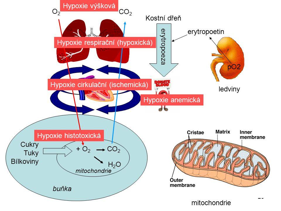 29 pO2 ledviny erytropoetin Kostní dřeň erytropoeza Cukry Tuky Bílkoviny buňka + O 2 CO 2 CO 2 H2OH2O mitochondrie Hypoxie histotoxická Hypoxie respir