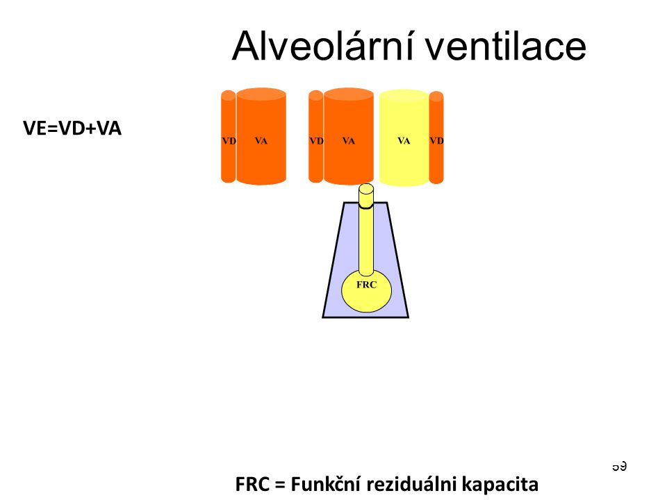 59 Alveolární ventilace VE=VD+VA FRC = Funkční reziduálni kapacita