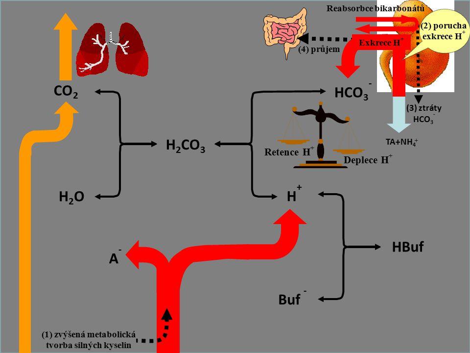 64 CO 2 H2OH2O H 2 CO 3 HCO 3 - Buf - HBuf H+H+ A-A- Retence H + Deplece H + TA+NH 4 + Reabsorbce bikarbonátů (3) ztráty HCO 3 - (4) průjem Exkrece H