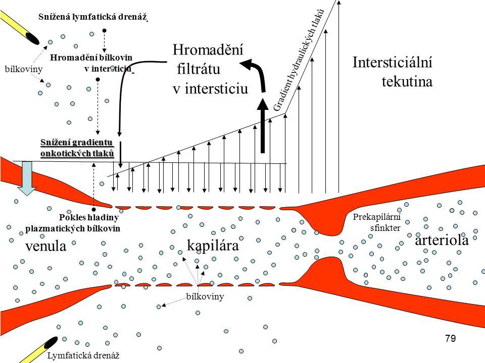 79 arteriola venula kapilára Snížení gradientu onkotických tlaků Gradient hydraulických tlaků Hromadění filtrátu v intersticiu Prekapilární sfinkter L