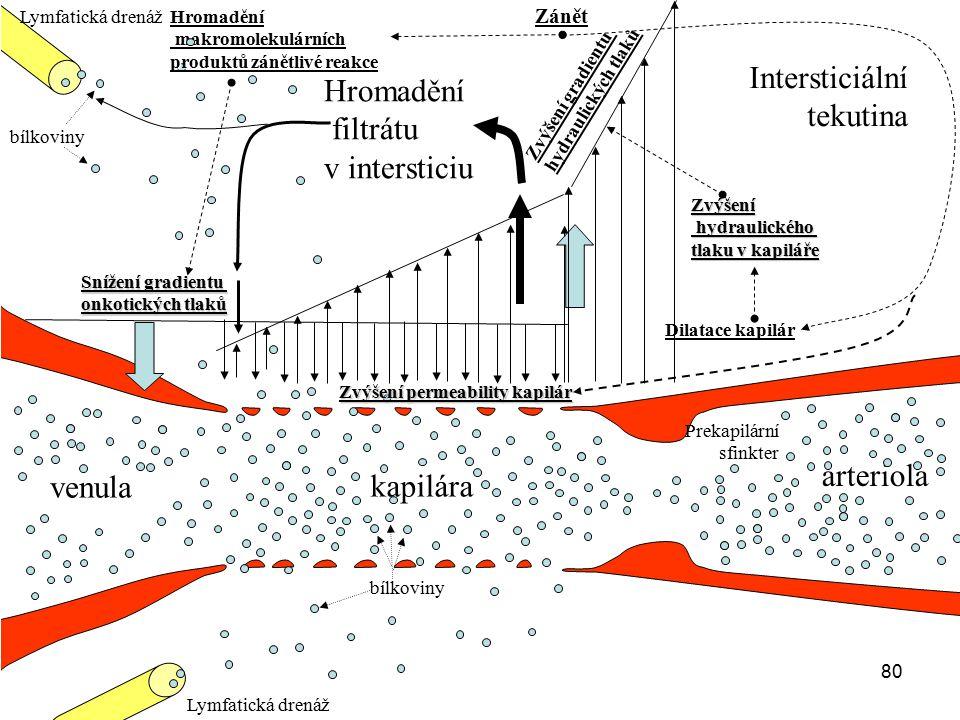 80 arteriola venula kapilára Hromadění filtrátu v intersticiu Prekapilární sfinkter Lymfatická drenáž bílkoviny Intersticiální tekutina Snížení gradie