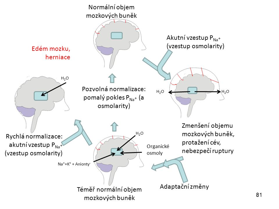 81 Akutní vzestup P Na + (vzestup osmolarity) Zmenšení objemu mozkových buněk, protažení cév, nebezpečí ruptury Adaptační změny Na + +K + + Anionty -