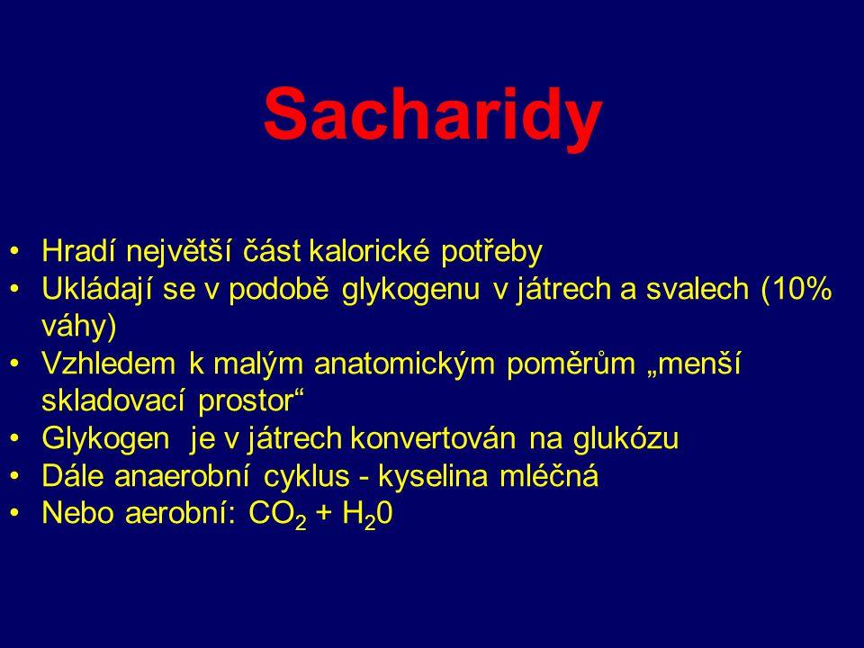 """Sacharidy Hradí největší část kalorické potřeby Ukládají se v podobě glykogenu v játrech a svalech (10% váhy) Vzhledem k malým anatomickým poměrům """"me"""