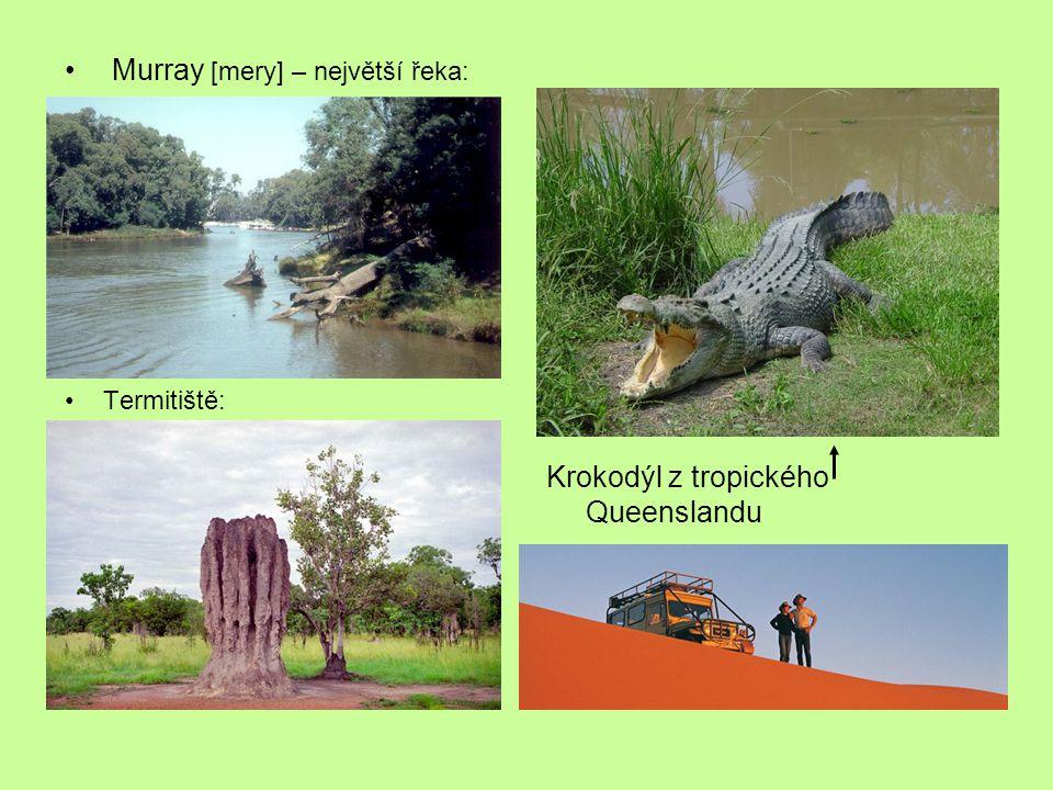 Murray [mery] – největší řeka: Termitiště: Krokodýl z tropického Queenslandu