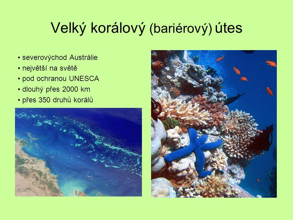 Velký korálový (bariérový) útes severovýchod Austrálie největší na světě pod ochranou UNESCA dlouhý přes 2000 km přes 350 druhů korálů