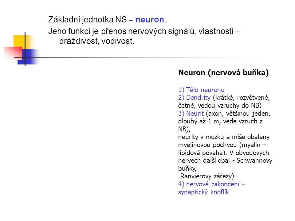Základní jednotka NS – neuron. Jeho funkcí je přenos nervových signálů, vlastnosti – dráždivost, vodivost. Neuron (nervová buňka) 1) Tělo neuronu 2) D