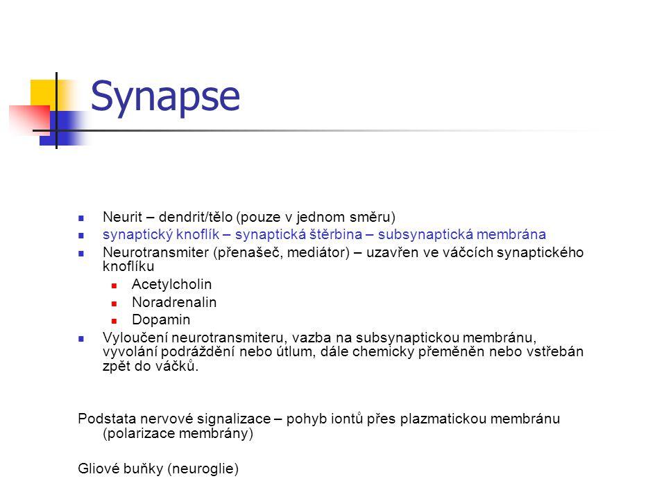 Synapse Neurit – dendrit/tělo (pouze v jednom směru) synaptický knoflík – synaptická štěrbina – subsynaptická membrána Neurotransmiter (přenašeč, medi