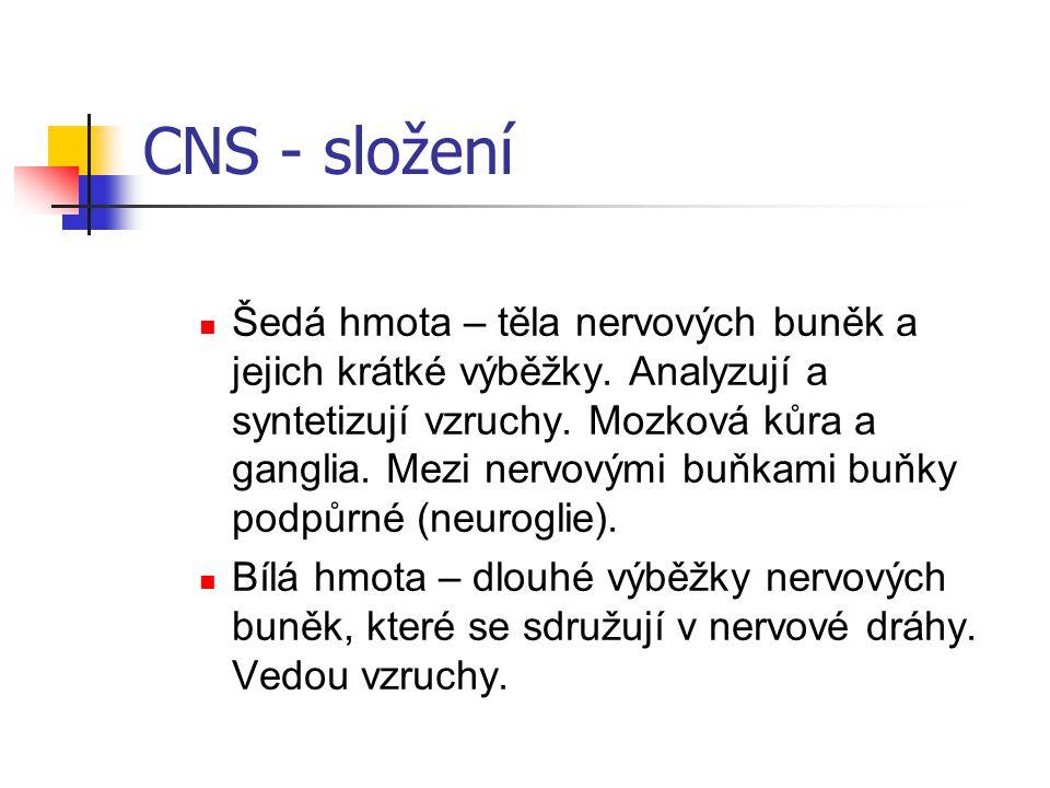 CNS - složení Šedá hmota – těla nervových buněk a jejich krátké výběžky. Analyzují a syntetizují vzruchy. Mozková kůra a ganglia. Mezi nervovými buňka