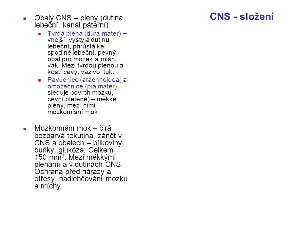 Obaly CNS – pleny (dutina lebeční, kanál páteřní) Tvrdá plena (dura mater) – vnější, vystýlá dutinu lebeční, přirůstá ke spodině lebeční, pevný obal p