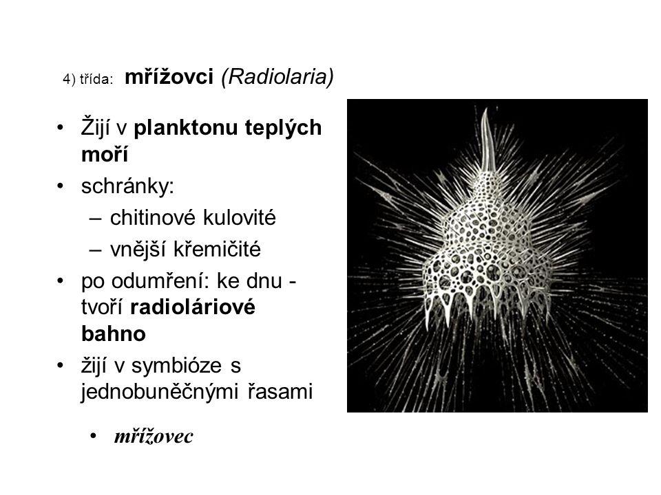 4) třída: mřížovci (Radiolaria) Žijí v planktonu teplých moří schránky: –chitinové kulovité –vnější křemičité po odumření: ke dnu - tvoří radioláriové