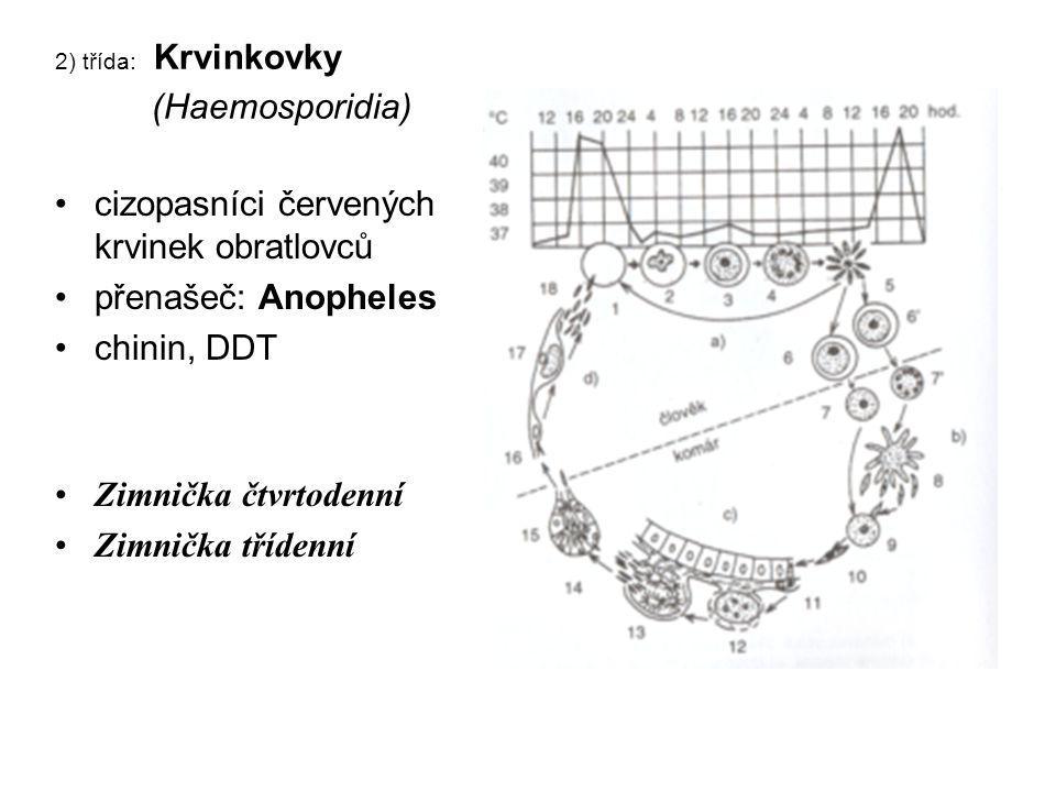 2) třída: Krvinkovky (Haemosporidia) cizopasníci červených krvinek obratlovců přenašeč: Anopheles chinin, DDT Zimnička čtvrtodenní Zimnička třídenní