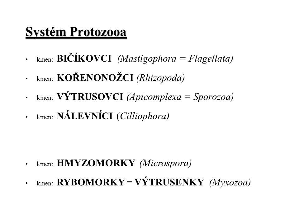 Systém Protozooa kmen: BIČÍKOVCI (Mastigophora = Flagellata) kmen: KOŘENONOŽCI (Rhizopoda) kmen: VÝTRUSOVCI (Apicomplexa = Sporozoa) kmen: NÁLEVNÍCI (