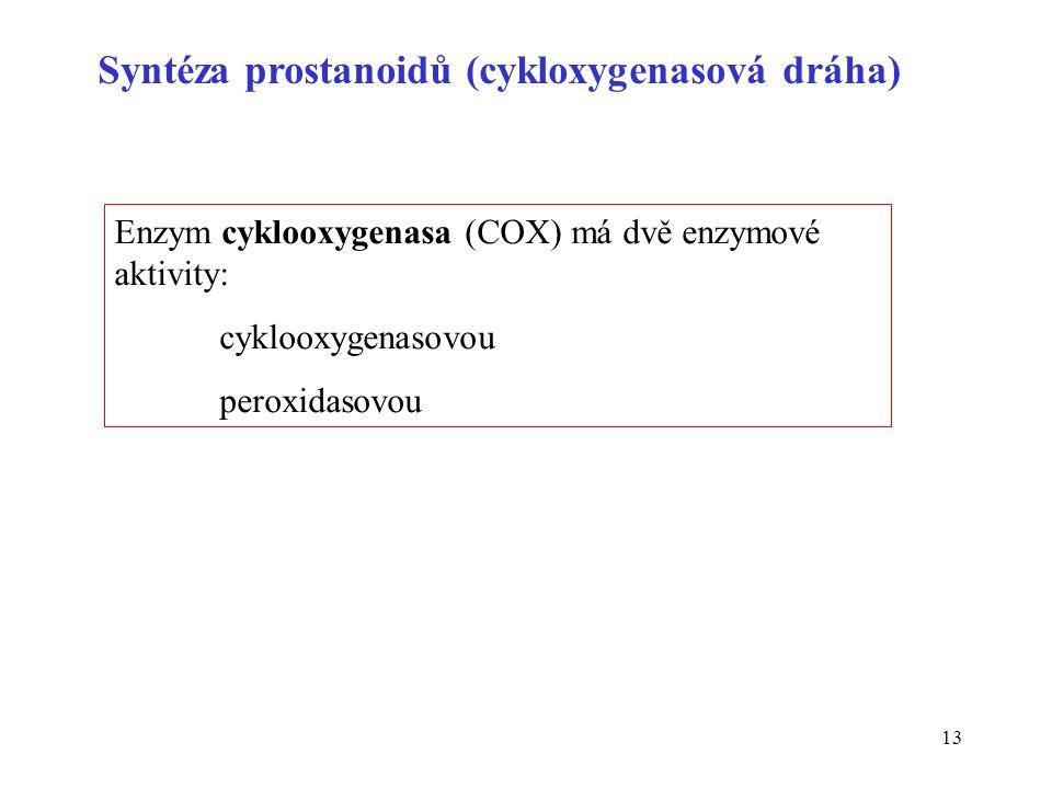 13 Syntéza prostanoidů (cykloxygenasová dráha) Enzym cyklooxygenasa (COX) má dvě enzymové aktivity: cyklooxygenasovou peroxidasovou