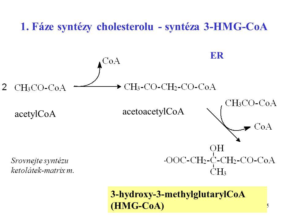 25 3-hydroxy-3-methylglutarylCoA (HMG-CoA) acetylCoA acetoacetylCoA ER 1. Fáze syntézy cholesterolu - syntéza 3-HMG-CoA Srovnejte syntézu ketolátek-ma