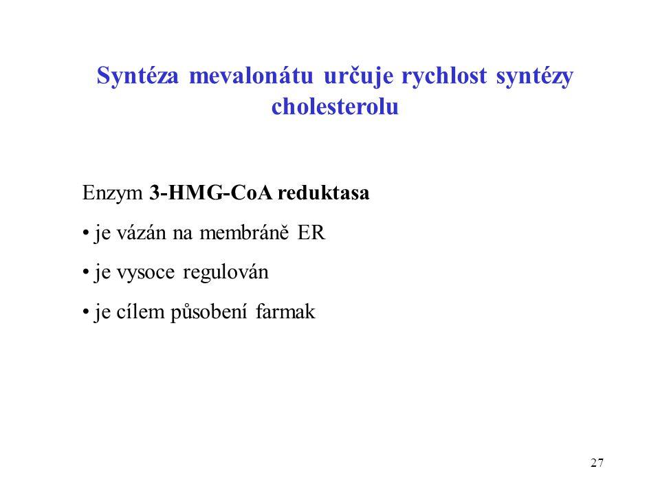 27 Syntéza mevalonátu určuje rychlost syntézy cholesterolu Enzym 3-HMG-CoA reduktasa je vázán na membráně ER je vysoce regulován je cílem působení far