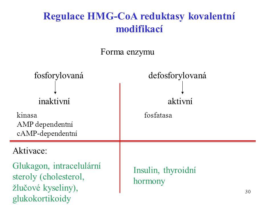 30 Regulace HMG-CoA reduktasy kovalentní modifikací Forma enzymu fosforylovanádefosforylovaná inaktivníaktivní Glukagon, intracelulární steroly (chole
