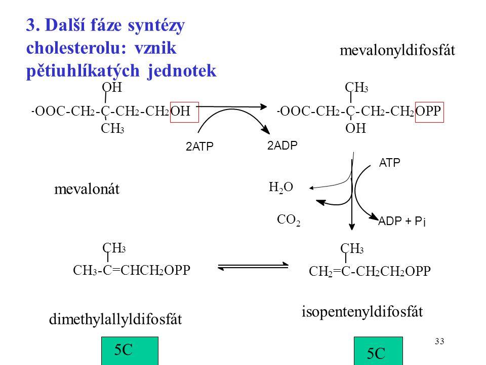 33 mevalonyldifosfát mevalonát isopentenyldifosfát dimethylallyldifosfát 5C CO 2 H2OH2O 3. Další fáze syntézy cholesterolu: vznik pětiuhlíkatých jedno