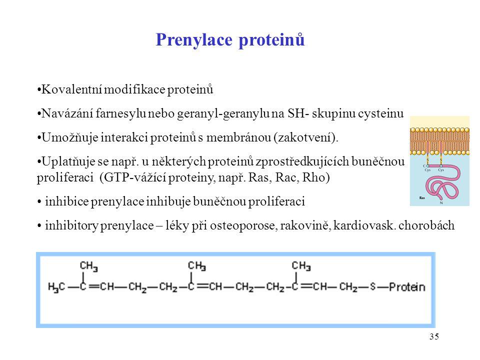 35 Prenylace proteinů Kovalentní modifikace proteinů Navázání farnesylu nebo geranyl-geranylu na SH- skupinu cysteinu Umožňuje interakci proteinů s me