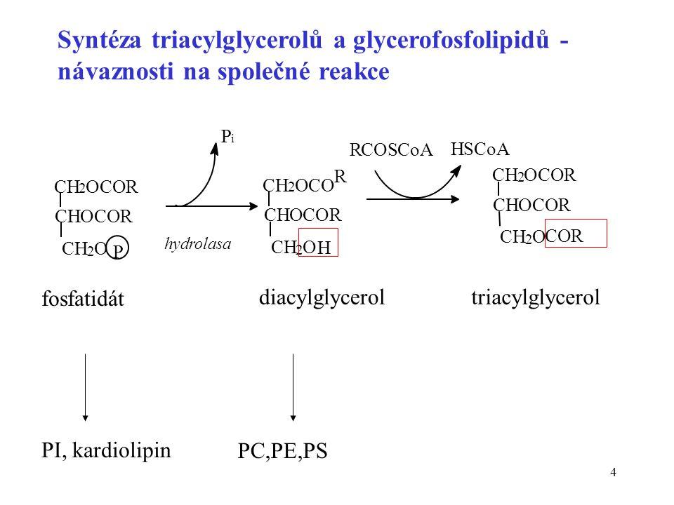 4 Syntéza triacylglycerolů a glycerofosfolipidů - návaznosti na společné reakce P i PI, kardiolipin P CH 2 OCOR CHOCOR CH 2 O R RCOSCoA HSC CH 2 OCOR