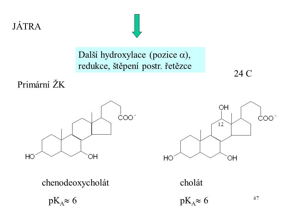 47 Další hydroxylace (pozice  ), redukce, štěpení postr. řetězce Primární ŽK chenodeoxycholátcholát JÁTRA 24 C pK A  6 12