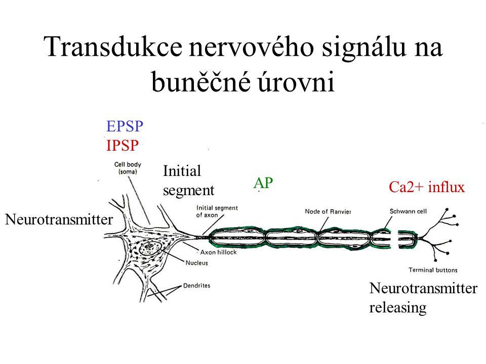 Ovlivnění přenosu signálu aktivitou jednotlivé buňky Discharge configurations (Pálící vzorce různých buněk) EPSP IPSP