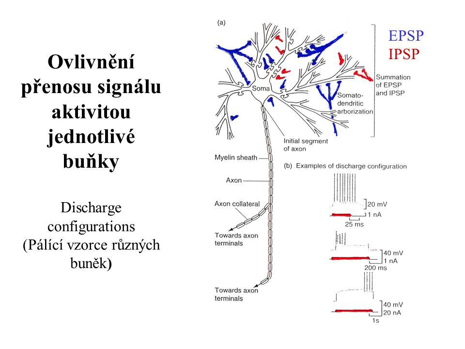 Ovlivnění přenosu signálu aktivitou jednotlivé buňky 1.