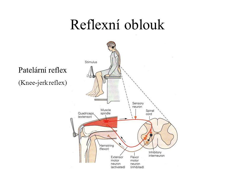 Výzkum reflexů Ivan Petrovich Pavlov Nobelova cena 1904